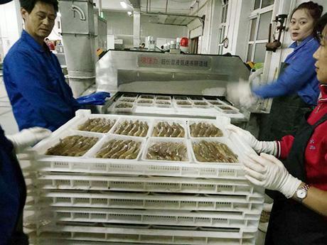 鲜甜盐湖虾专用德捷力液氮隧道式速冻线