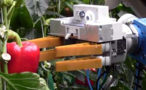 """新型智能""""手臂""""即将诞生 可自行判断采摘水果"""