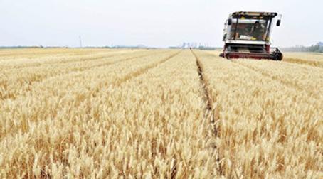 河南汤阴县完善小麦产业链 监控源头引进生产线
