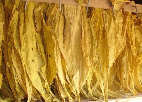提升烟叶烘烤水平 助力烟农丰收
