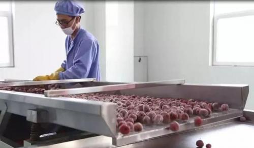 全汁发酵工艺让红果更红