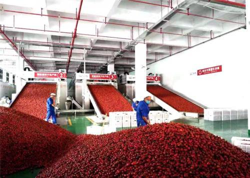 贵州遵义成全球辣椒集散地