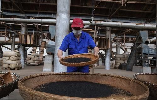 老筛茶师日制茶500斤 最贵售万元1斤
