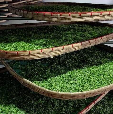 绿茶的加工制作工艺