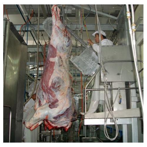 BV型 牛用带式劈半锯 二分体锯 分割锯 宰牛机