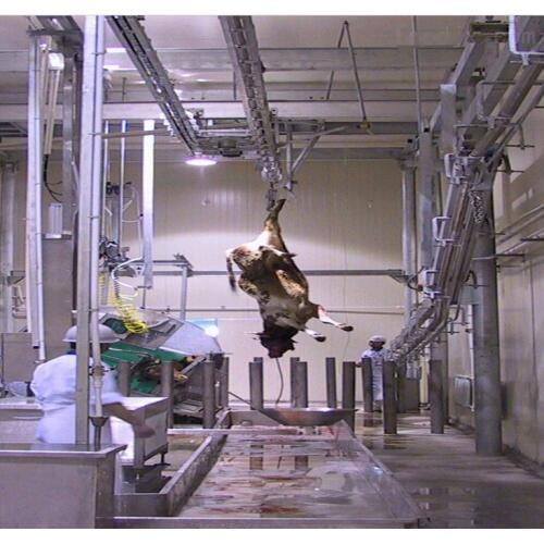 屠宰流水线牦牛换轨 牛屠宰加工设备