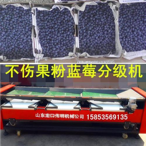 不伤果粉蓝莓选果机,振动筛网四级蓝莓筛选机