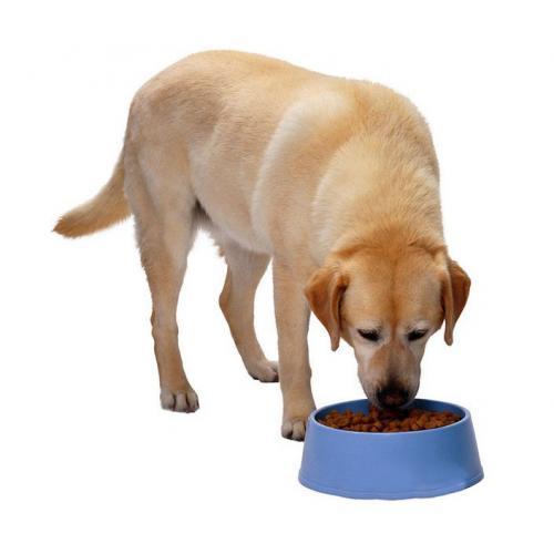 饲料加工设备时产150公斤全自动宠物饲料生产线