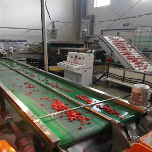 樱桃预冷分选机 樱桃重量分级设备 水预冷系统 多种水果可用
